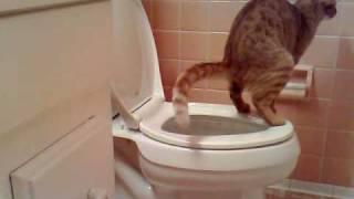 getlinkyoutube.com-cat pooping in toilet
