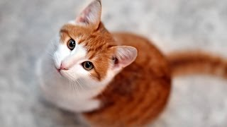 getlinkyoutube.com-Is It Safe to Let Your Cat Go Outside? | Cat Care