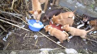 getlinkyoutube.com-Hundebabys Jalón: Oktober 2012 - Puppies Xaló