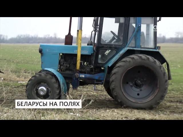СвоёТВ: Белорусы на полях