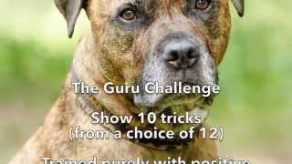 Tigger's Guru Trick Dog Title Application