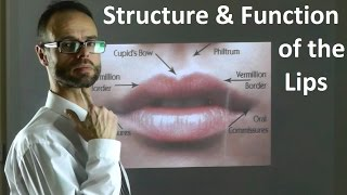 getlinkyoutube.com-Role of the Structure & Shape of Upper & Lower Lips in Facial Attractiveness & Beauty by Dr Mike Mew
