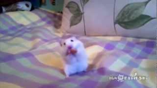 getlinkyoutube.com-Śmieszne zwierzęta :D Funny Animals