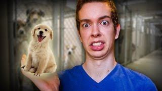 THE CUTEST THING EVER! - Parker Does Animal Shelter
