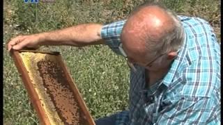 getlinkyoutube.com-Proizvodnja pčelinje matice - Branko Kaurin