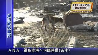 Loyal Dog Won''t Leave Injured Friend Behind - HELP JAPAN''S LOST & INJURED TSUNAMI PETS