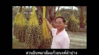 getlinkyoutube.com-4 ปีของสวนอินทผาลัมแก้วอนงค์ ลำปาง