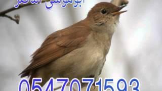 getlinkyoutube.com-شريط العندليب لتسميع الطيور
