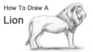 getlinkyoutube.com-How to Draw a Lion