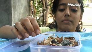 How to Feed a Baby Bird