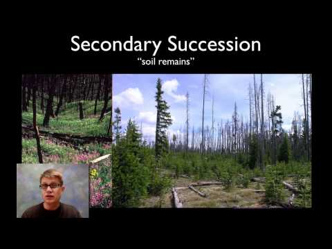 images of ecological succession
