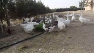 getlinkyoutube.com-الجزائـــر الزراعة المائية اسـتـنـبـات الشـعـيـر6   Hydroponics barley breeding