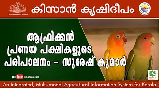getlinkyoutube.com-Feature on rearing of African love birds by Suresh Kumar, Trivandrum