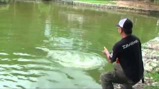 getlinkyoutube.com-Toman Zoo Negara Malaysia 10 KG