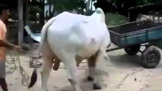 Kalali