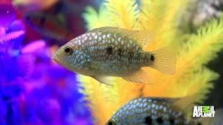 getlinkyoutube.com-This Designer Fish Tank Has An Automatic Feeder! | Tanked