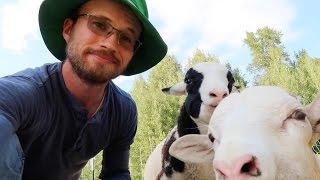 getlinkyoutube.com-the Permaculture Shepherd