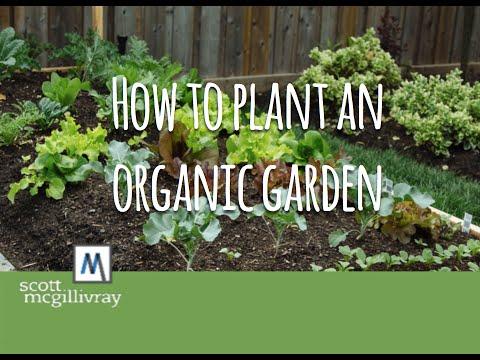 How to Plant an Organic Garden
