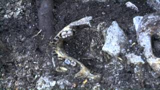 getlinkyoutube.com-Ritrovamento dei caduti della I guerra mondiale sul Menderle