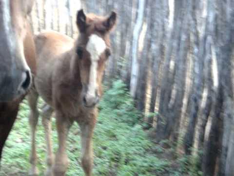 POTRO QUARTO DE MILHA NASCIDO EM16/05/2011 EM QUIXERAMOBIM-CE(A VENDA)(85)99888871/(88)92644442