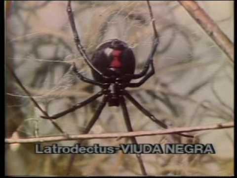Animales venenosos: Arañas y ofidios