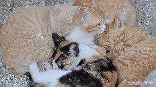 getlinkyoutube.com-2014 7 9 子猫が姿を消した日。野良猫達 today stray cat and kitten 【瀬戸の野良猫日記】