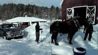 getlinkyoutube.com-Draft Horses, Iceman & Mario pull the Ford 350 truck out of the snow up hill