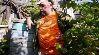 getlinkyoutube.com-Как начать заниматься пчеловодством