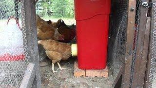 Homemade bulk chicken feeder