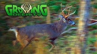 November Bucks in Rut: Deer Hunting Action (#313) @GrowingDeer.tv