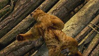 TEKKEN 7 - Kuma and Panda Reveal Trailer