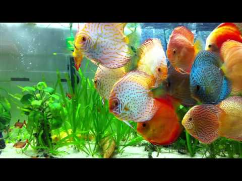 Planted Discus tank -VCaTeo5ISWU