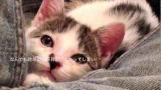 getlinkyoutube.com-子猫を保護した一ヶ月間の記録