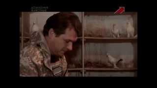 """getlinkyoutube.com-Голуби в передаче """"Моя скотина"""" на телеканале Домашние животные"""