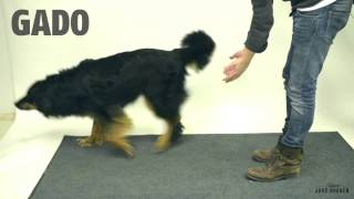 Tour de magie pour chien