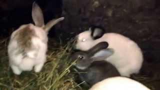 getlinkyoutube.com-Кролики в яме