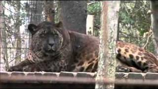 Bear Creek Sanctuary - Jaglions Tsunami & Jahzara - YouTube