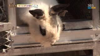 getlinkyoutube.com-SBS [동물농장] - 서울 도심 골목 토끼왕국