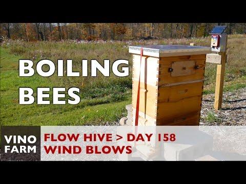 Flow Hive - Battling Nature - Day 158 - Novice Beekeeper