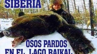Oso pardo siberiano en cueva, en el lago Baikal