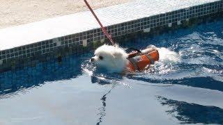 getlinkyoutube.com-Cute doggies learn to SWIM!