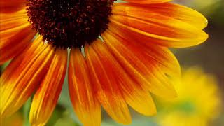 getlinkyoutube.com-Love Poem (Spring Waltz OST)