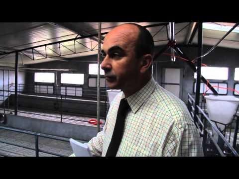 FARMAGEDDON - The biggest pig farm in the world?