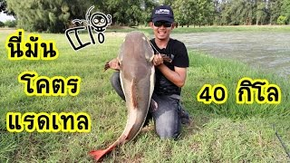 getlinkyoutube.com-นี่มันโคตร...red tail ยักษ์ by fishingEZ