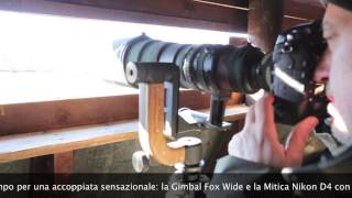 Test Gimbal Head with Nikon D4 & 500 f4 VR II