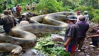 getlinkyoutube.com-ระวัง! งู 10 ชนิดนี้อันตรายที่สุดในโลก