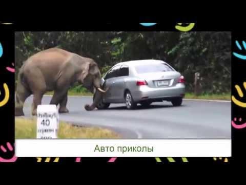 Слон уничтожает автомобиль. Elephant kills car.