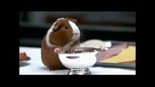 getlinkyoutube.com-Dr. Dolittle - Guinea Pig - Chris Rock