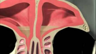getlinkyoutube.com-3D Sinus Animation