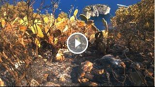 Capri: Ecco cosa rimane dopo l'incendio sulla collina di Tuoro